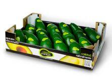 Авокадо (ящ. 20шт)