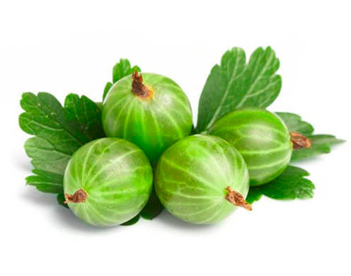 Агрус (цена за 1 кг) | Купить свежий агрус в Одессе с доставкой